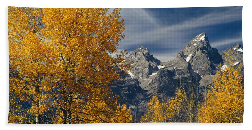 Aspens Bath Sheet featuring the photograph 1m9352-aspens In Autumn And The Teton Range by Ed Cooper Photography