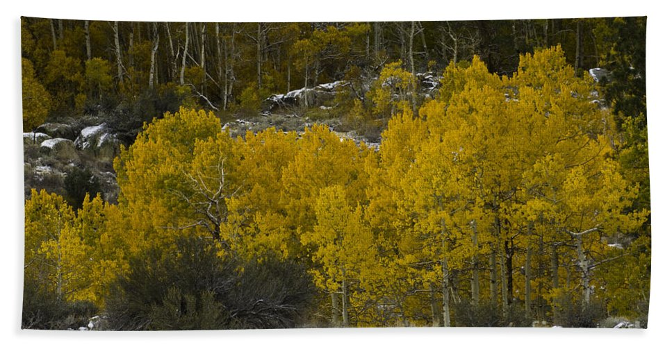 Quaking Aspen Bath Sheet featuring the photograph Aspens In Snow by John Shaw