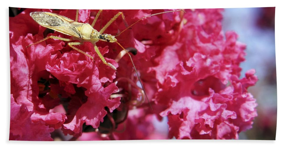 Insect Bath Sheet featuring the photograph Assassin Bug by Jason Politte