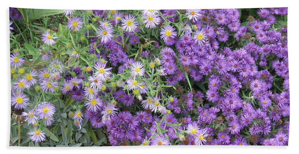 Asters Hand Towel featuring the photograph Asters Light And Dark by Ron Monsour