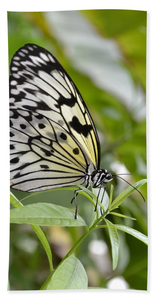 Rice-paper Butterfly Bath Sheet featuring the photograph At Rest by Spikey Mouse Photography