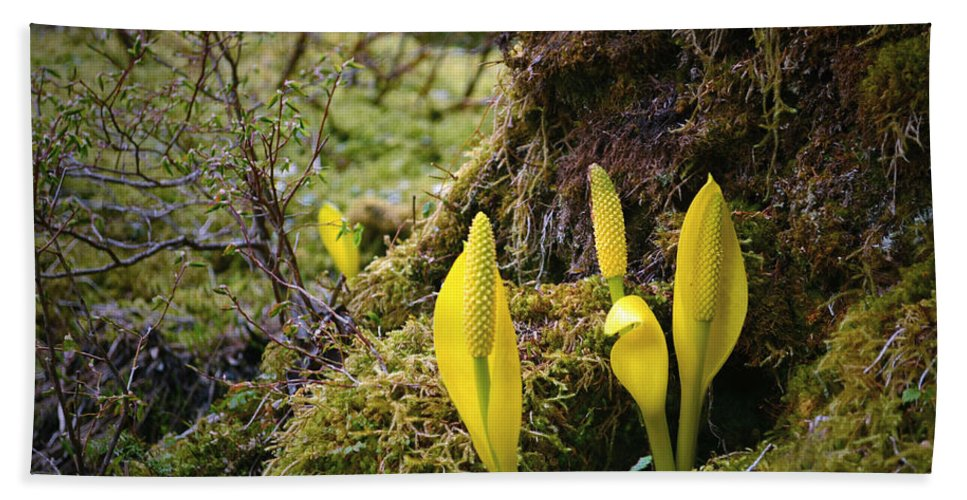 Forest Hand Towel featuring the photograph At The Bottom Of The Forest by Tara Turner
