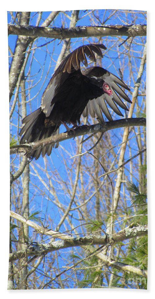 Turkey Vulture Hand Towel featuring the photograph Attack Of The Turkey Vulture by Elizabeth Dow