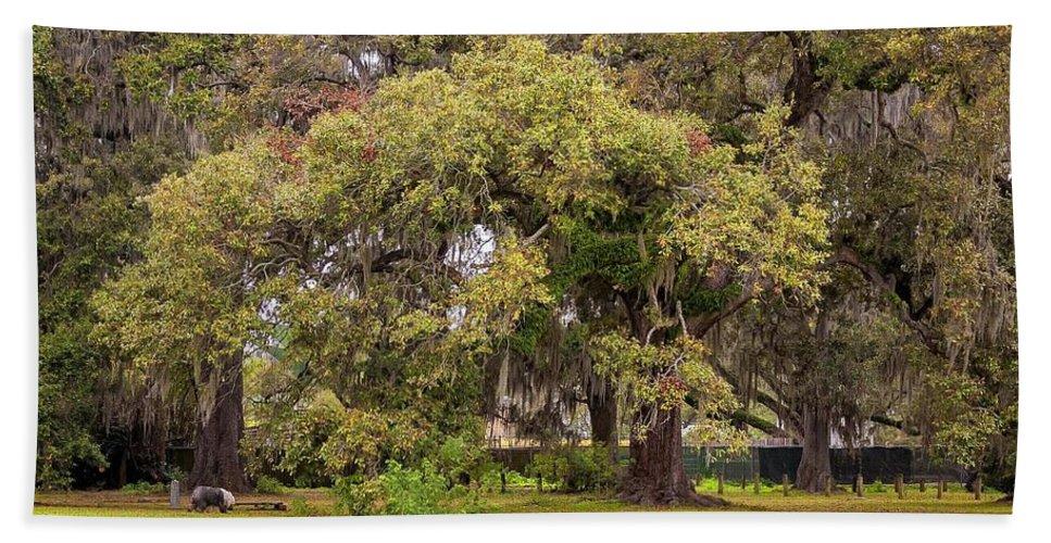 New Orleans Bath Sheet featuring the photograph Audubon Park by Steve Harrington