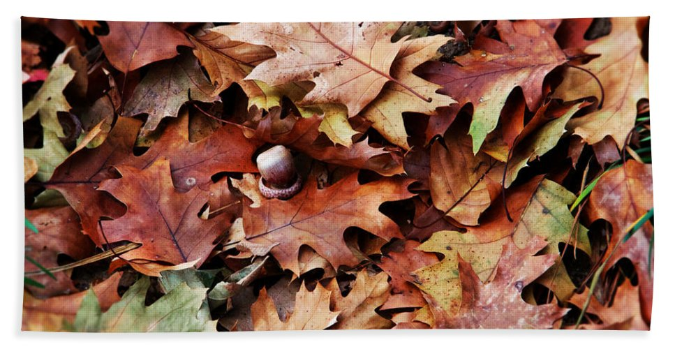 Germantown Bath Sheet featuring the photograph Autumn Acorn by Alice Gipson