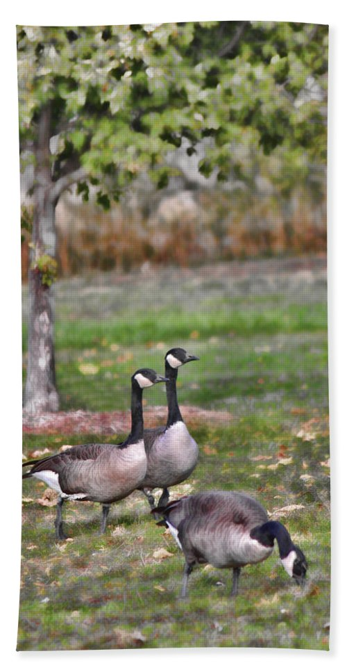 Geese Bath Sheet featuring the photograph Autumn Afternoon by Sylvia Thornton