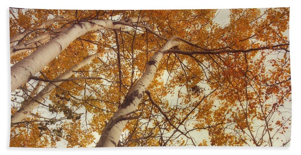 Aspens Bath Sheet featuring the photograph Autumn Aspens by Priska Wettstein