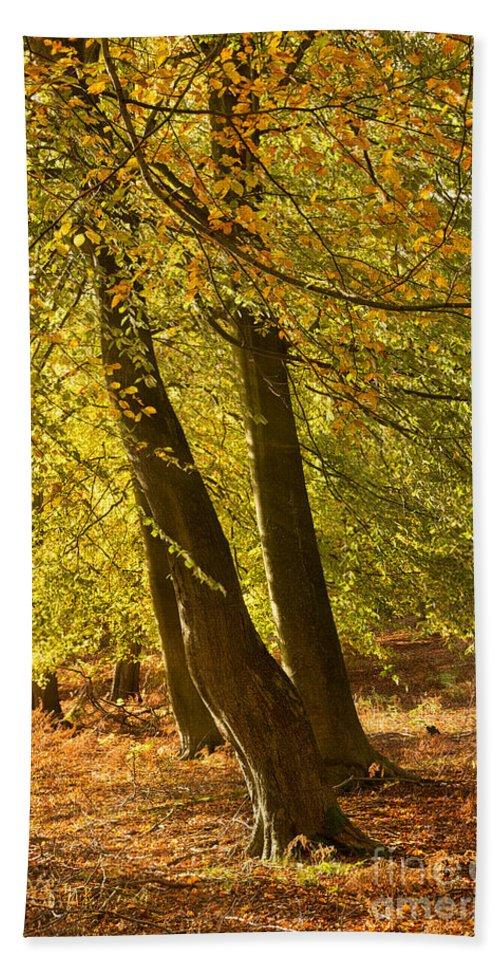 Autumn Forest Bath Sheet featuring the photograph Autumn Beeches by Ann Garrett