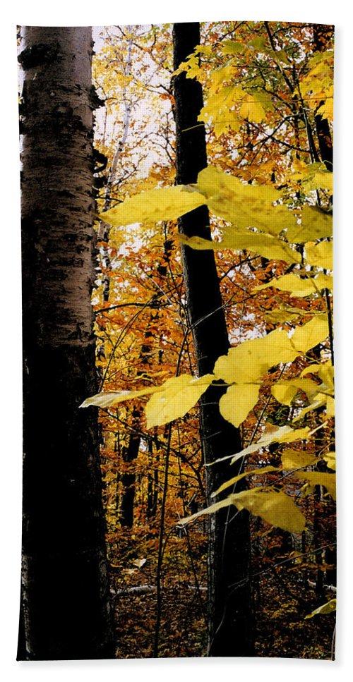 Green Bath Sheet featuring the photograph Autumn Birch Trees by Michelle Calkins