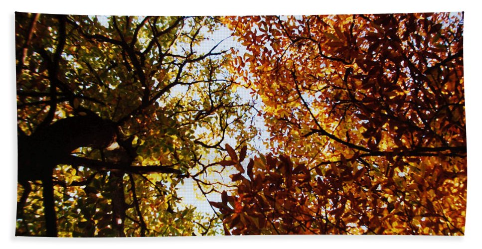 Autumn Chestnut Canopy Bath Towel featuring the photograph Autumn Chestnut Canopy  by Martin Howard