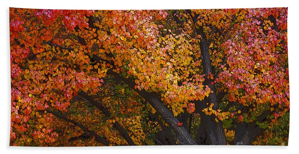 Trees Hand Towel featuring the photograph Autumn Color by Bob Christopher