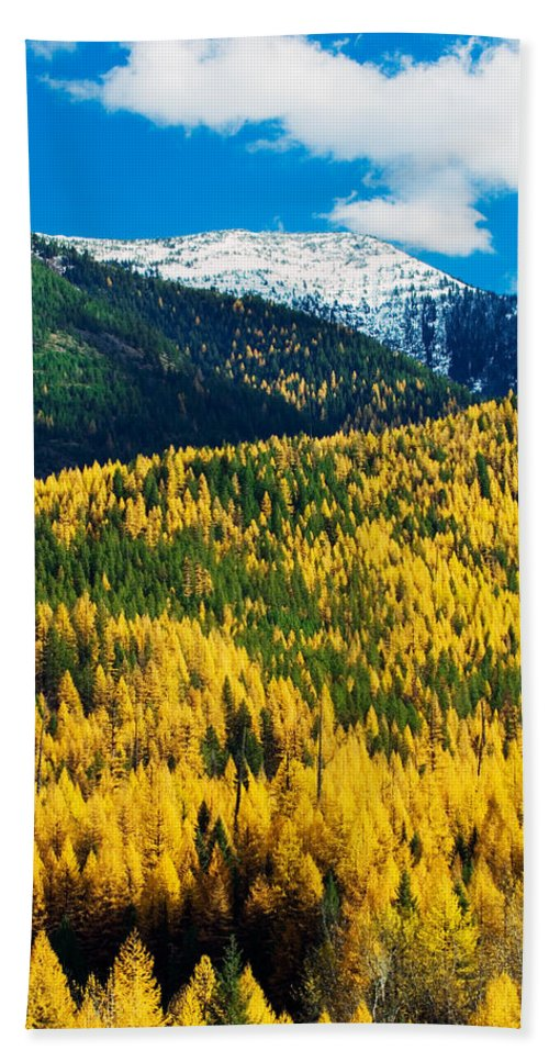 Photography Bath Sheet featuring the photograph Autumn Color Larch Trees In Pine Tree by Panoramic Images