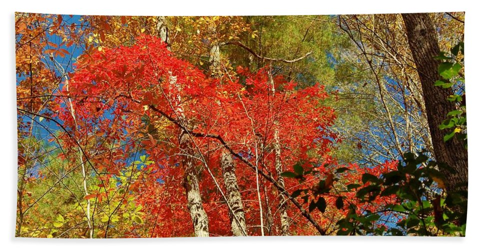 Autumn Hand Towel featuring the photograph Autumn Colors by Patrick Shupert