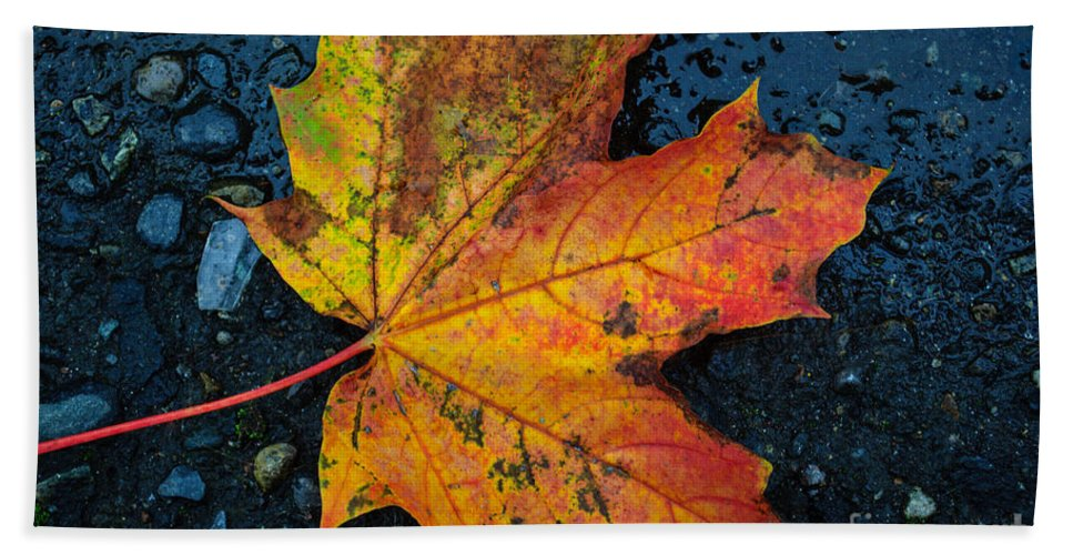 Autumn Bath Sheet featuring the photograph Autumn Colors by Tikvah's Hope