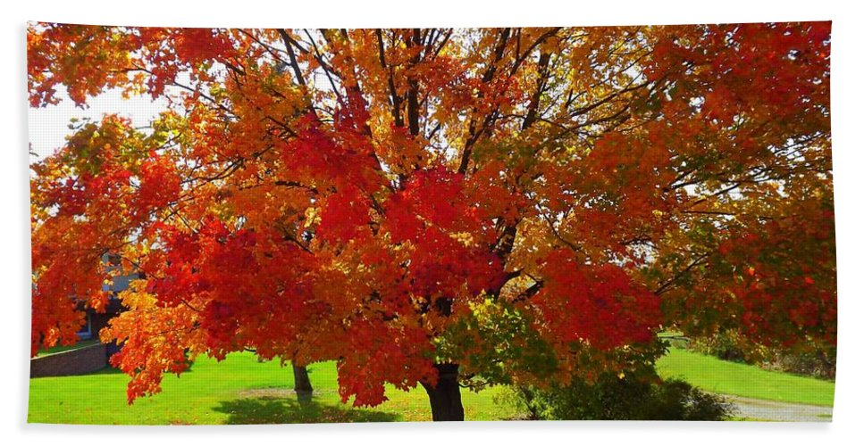 Branches Bath Sheet featuring the photograph Autumn Colours by Shelley Blair