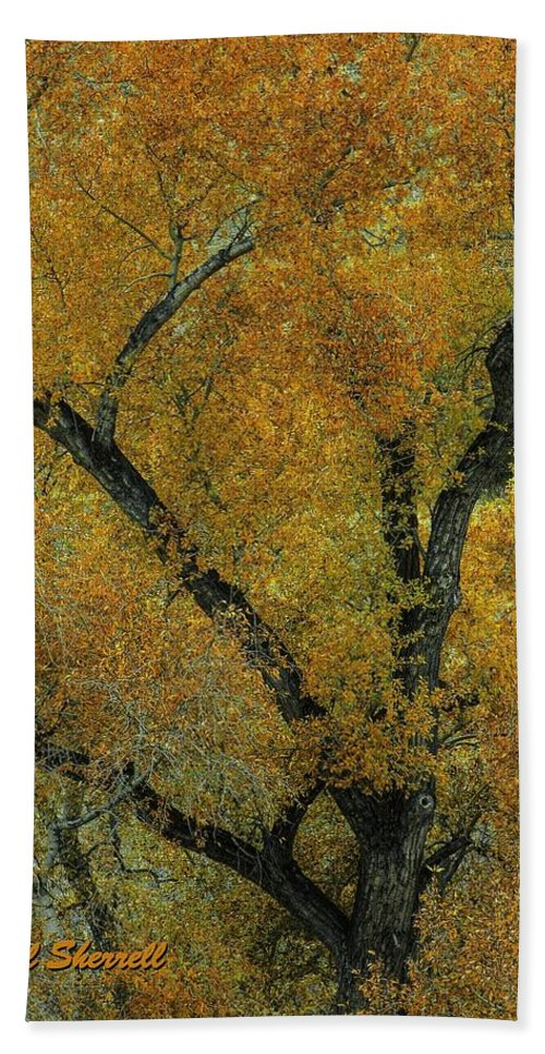 Landscape Hand Towel featuring the photograph Autumn Contrast by Bill Sherrell