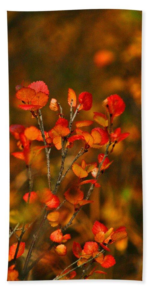 Autumn Hand Towel featuring the photograph Autumn Emblem by Jeremy Rhoades