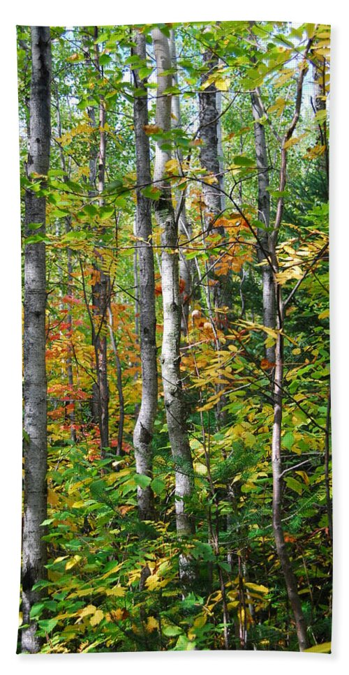 Landscape Hand Towel featuring the photograph Autumn Forest Detail by Cascade Colors