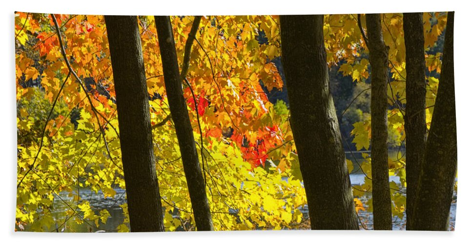 Art Hand Towel featuring the photograph Autumn Forest Scene by Randall Nyhof