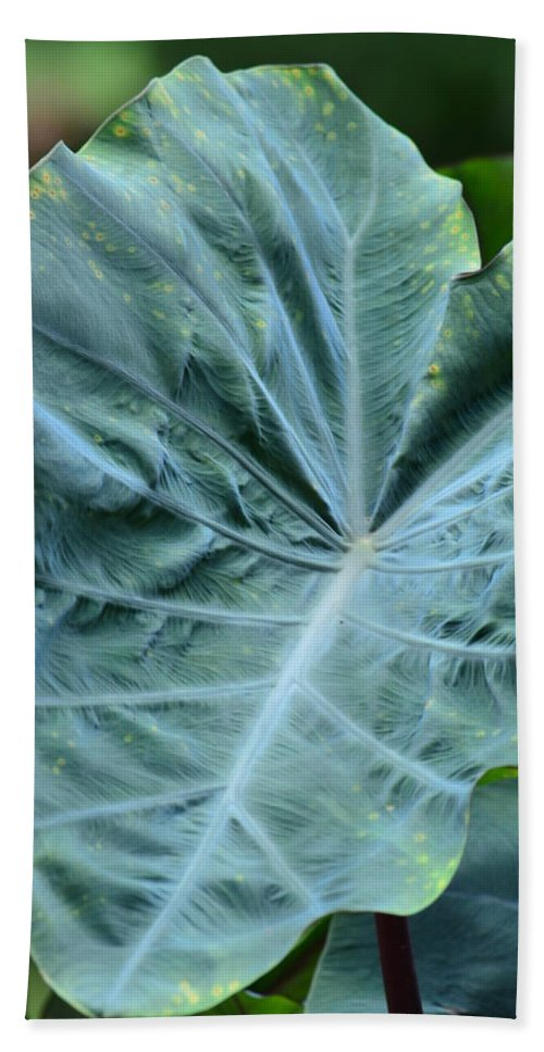 Autumn Green Bath Sheet featuring the photograph Autumn Green by Maria Urso