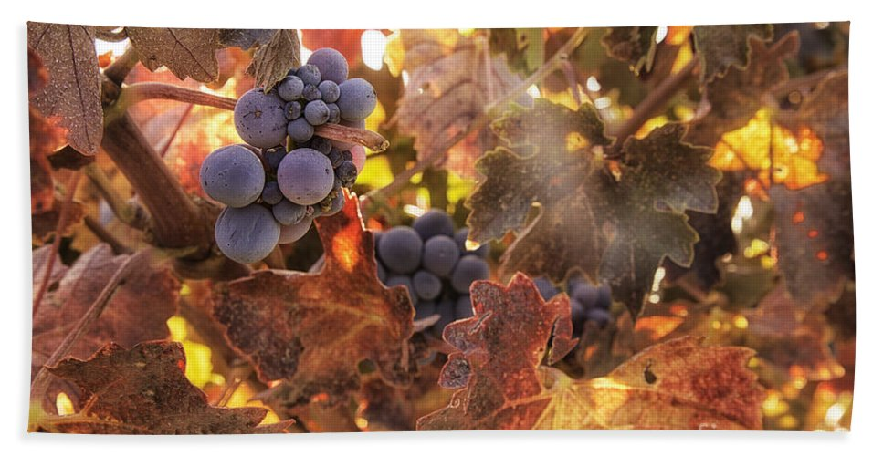 Michele Hand Towel featuring the photograph Autumn In The Vineyard by Michele Steffey