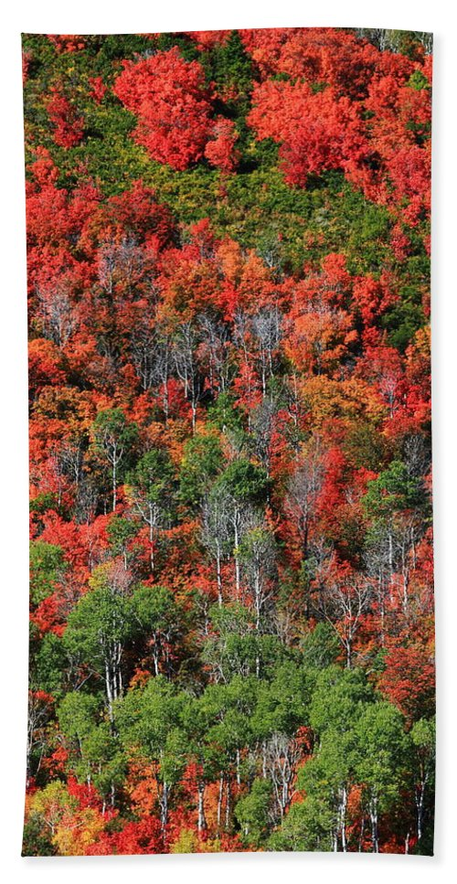 Autumn Leaves Hand Towel featuring the photograph Autumn In The Wasatch Range by Richard Cheski
