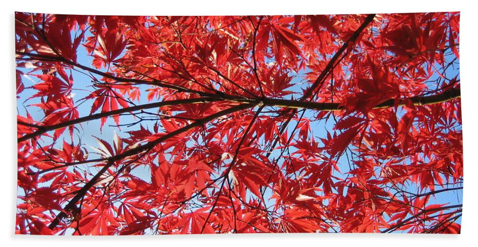 Leaves Hand Towel featuring the photograph Autumn Leaves And Blue Sky by Hope VanCleaf