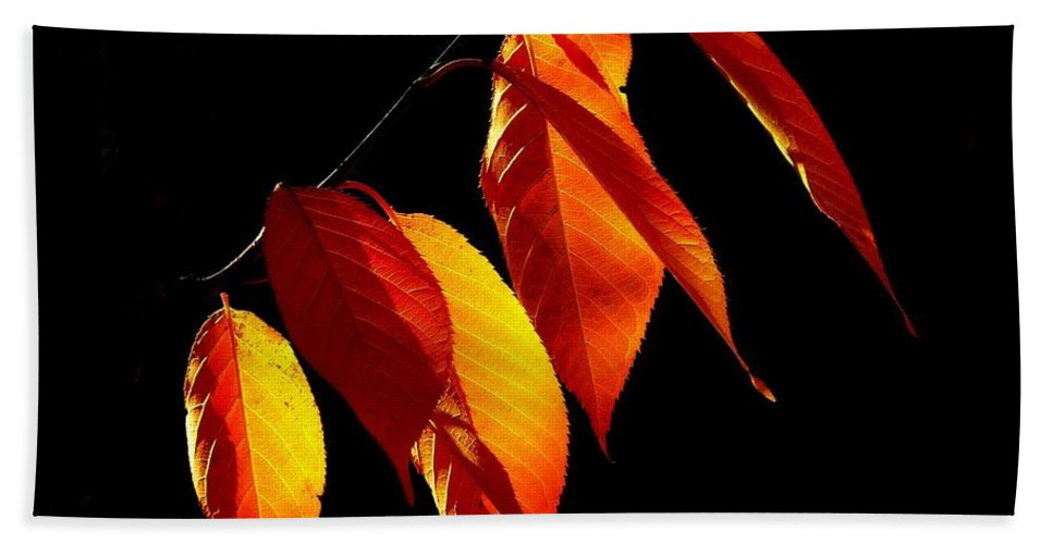 Beech Leaves Hand Towel featuring the photograph Autumn Leaves by Gallery Of Modern Art