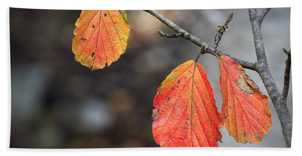 Leaves Bath Sheet featuring the photograph Autumn Leaves by Fran Gallogly
