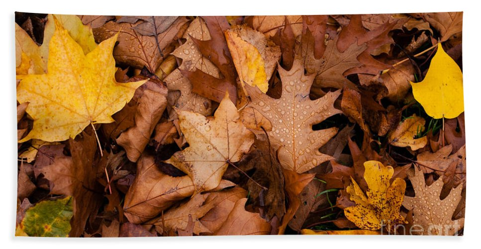 Red Hand Towel featuring the photograph Autumn Leaves by Matt Malloy