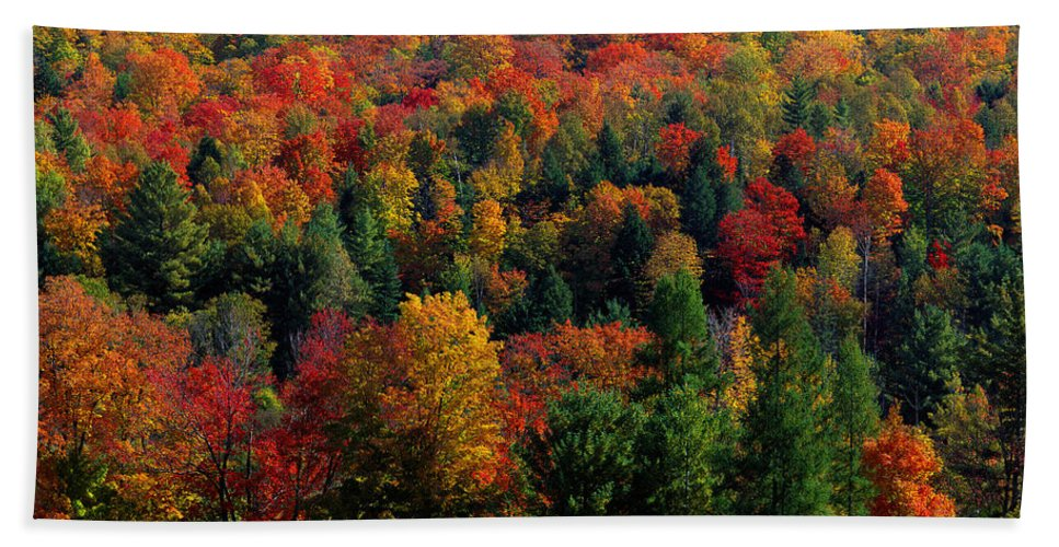 Photography Hand Towel featuring the photograph Autumn Leaves Vermont Usa by Panoramic Images