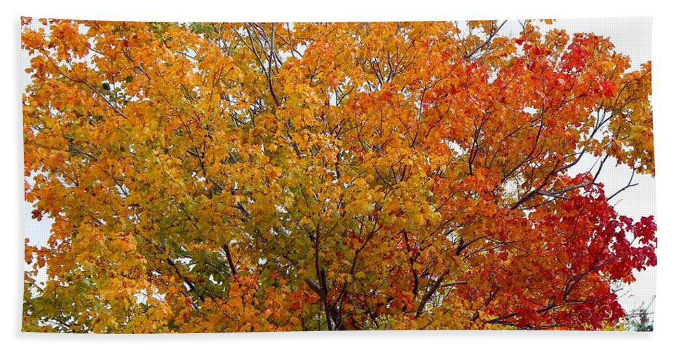 Autumn Maple Hand Towel featuring the photograph Autumn Maple by Barbara Griffin