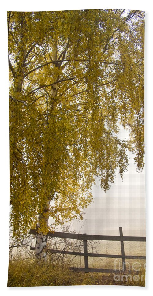 Tree Bath Sheet featuring the photograph Autumn Morning by Heiko Koehrer-Wagner