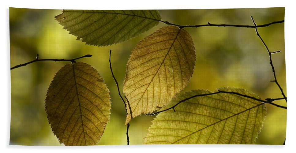 Autumn Bath Sheet featuring the photograph Autumn Mosaic by Penny Meyers