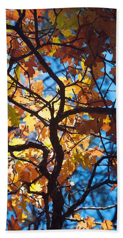 Autumn Bath Sheet featuring the photograph Autumn Oak by Brady Lane