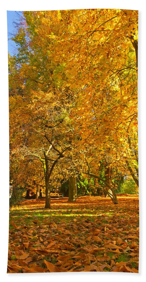 Autumn Hand Towel featuring the photograph Autumn Park by Jaroslav Frank