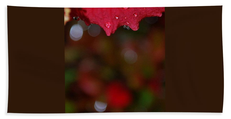 Water Drops Hand Towel featuring the photograph Autumn Rhapsody by Marija Djedovic