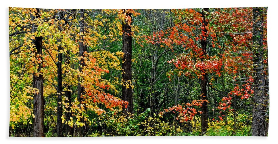 Autumn Hand Towel featuring the photograph Autumn by Frozen in Time Fine Art Photography