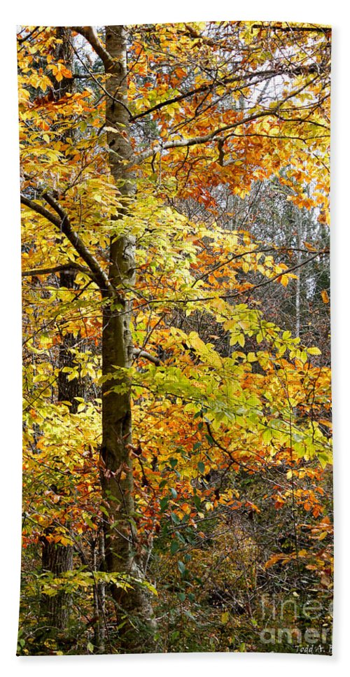 Landscape Hand Towel featuring the photograph Autumn Splendor by Todd Blanchard
