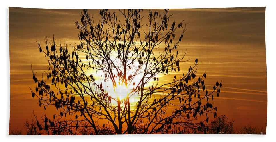 Autumn Bath Sheet featuring the photograph Autumn Tree In The Sunset by Michal Boubin