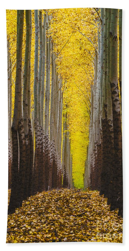 Autumn Hand Towel featuring the photograph Autumn Trees by Vishwanath Bhat