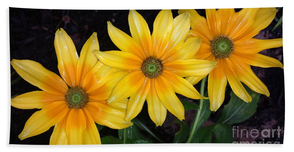 Black Eyed Susans Bath Sheet featuring the photograph Autumn Trinity by Amy Steeples