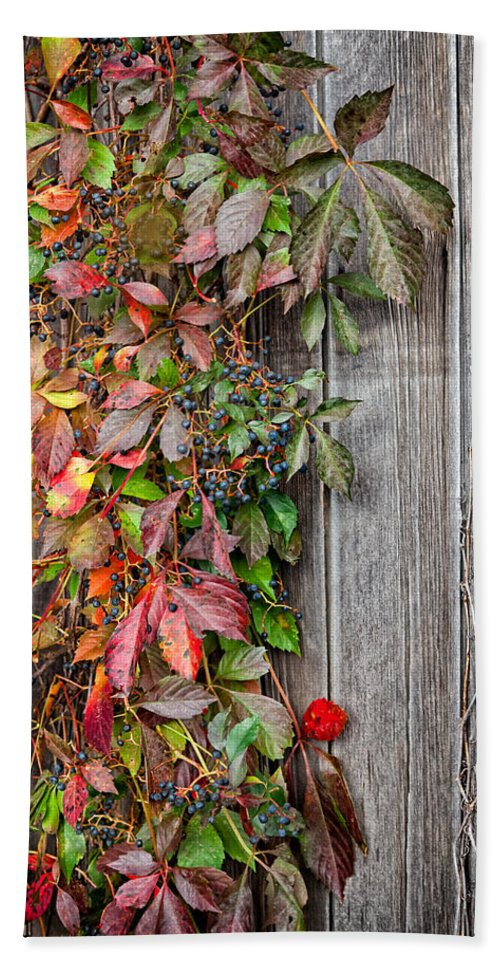 Vine Bath Sheet featuring the photograph Autumn Vine by Bill Wakeley