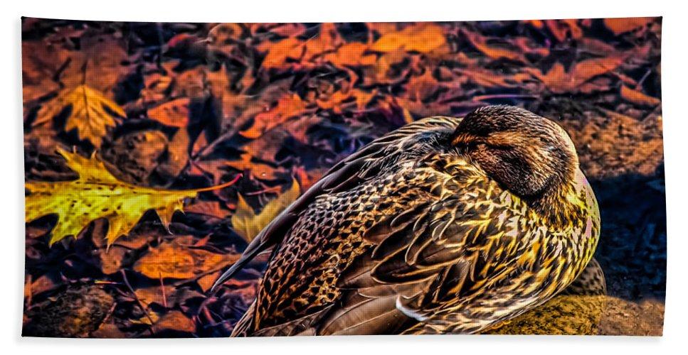 Mallard Bath Towel featuring the photograph Autumns Sleepy Duck by Bob Orsillo