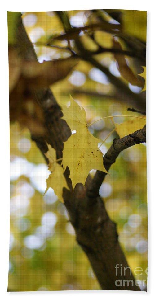 Autumn Bath Sheet featuring the photograph Autumn's Wondrous Colors 1 by Carol Lynch