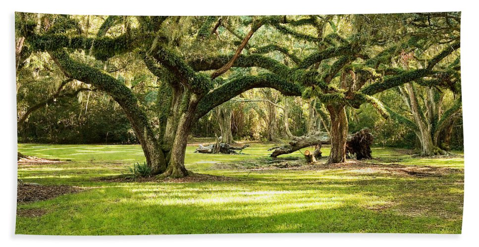 Oak Trees Hand Towel featuring the photograph Avery Island Oaks by Scott Pellegrin