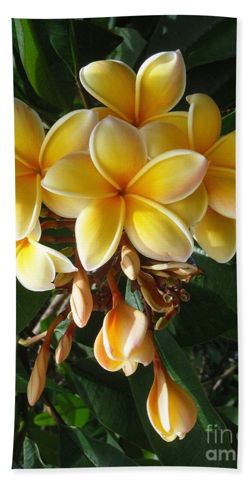 Aztec Gold Bath Towel featuring the photograph Aztec Gold Plumeria by Mary Deal