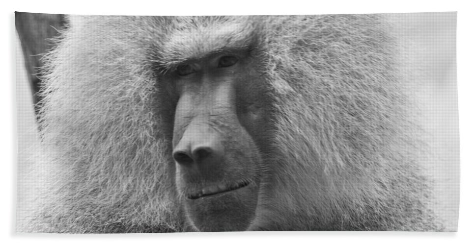 Baboon Bath Sheet featuring the photograph Baboon In Black And White by Jonny D