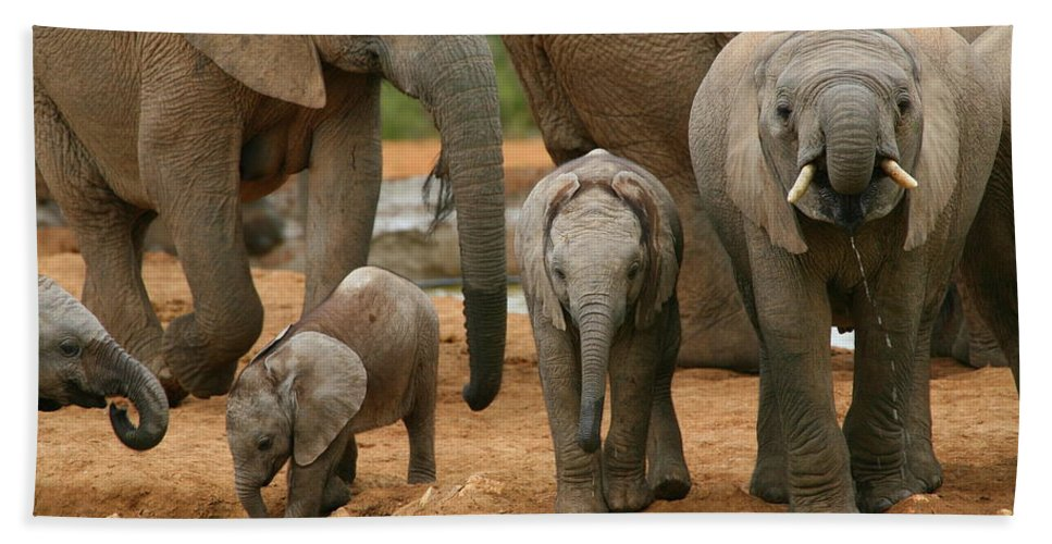Elephant Bath Sheet featuring the photograph Baby African Elephants by Bruce J Robinson