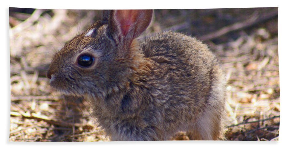 Hand Towel featuring the photograph Baby Bunny by Heather Coen